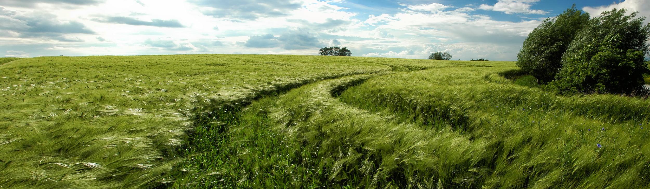 Feld bei Stavenhagen
