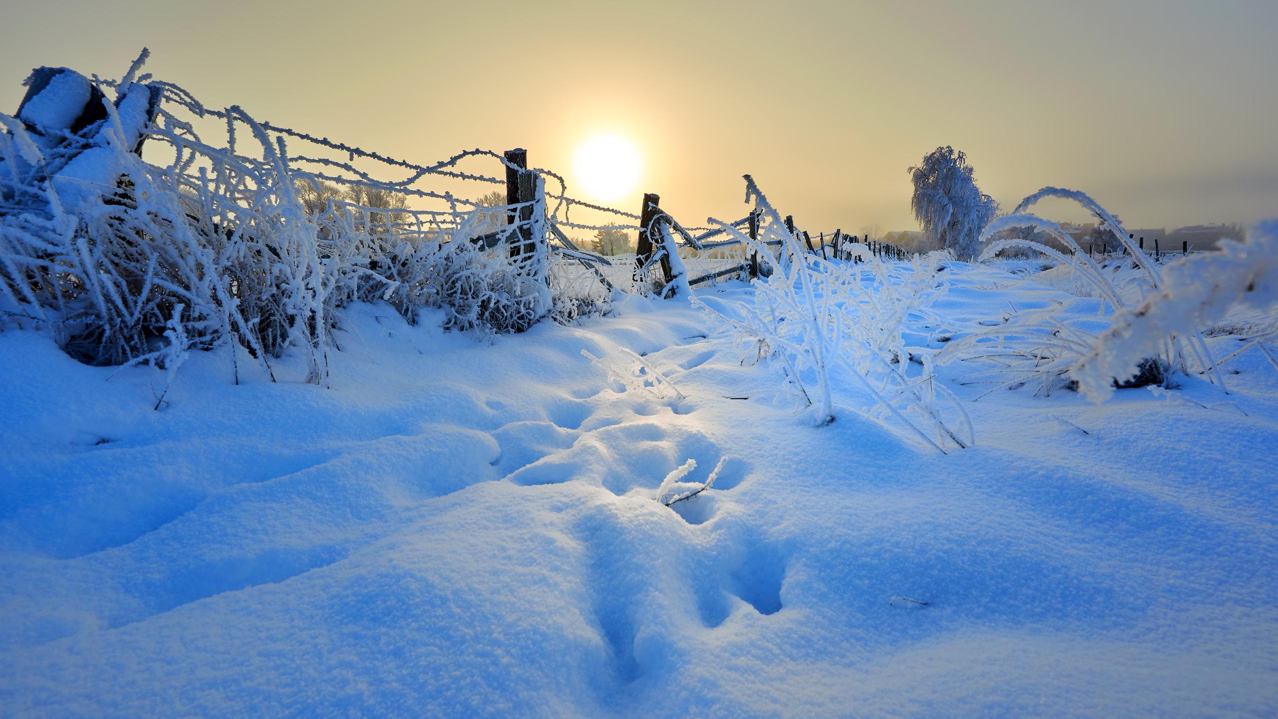 Wintermorgen auf den Wiesen vor Greifswald